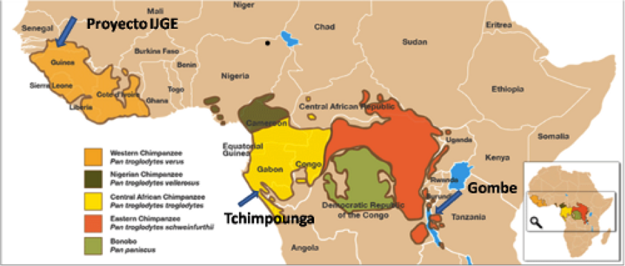 mapa bonobos png