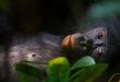 portada bonobos