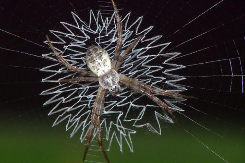 arañas 2