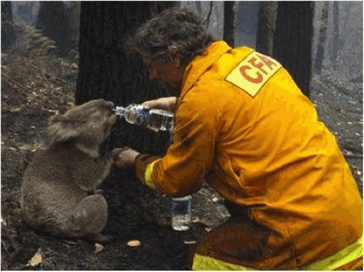 koala y bombero