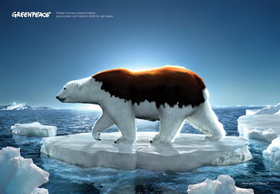 oso-polar-calentamiento-global-960x623