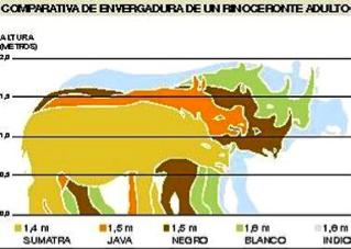 taman%cc%83o-rino